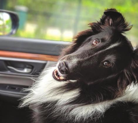 Bark voyage: traveling with pets